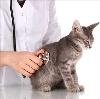 Ветеринарные клиники в Аниве